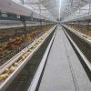 肉鸡笼育雏笼_肉鸡笼厂家直销_肉鸡笼送货上门